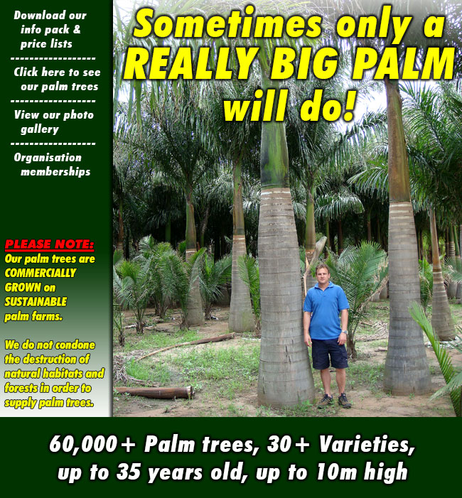 "60,000+ Palm trees on 3x Farms, 30+ Varieties, up to 35 years old, up to 10m high - ""If we didn't grow it, we don't sell it!"""
